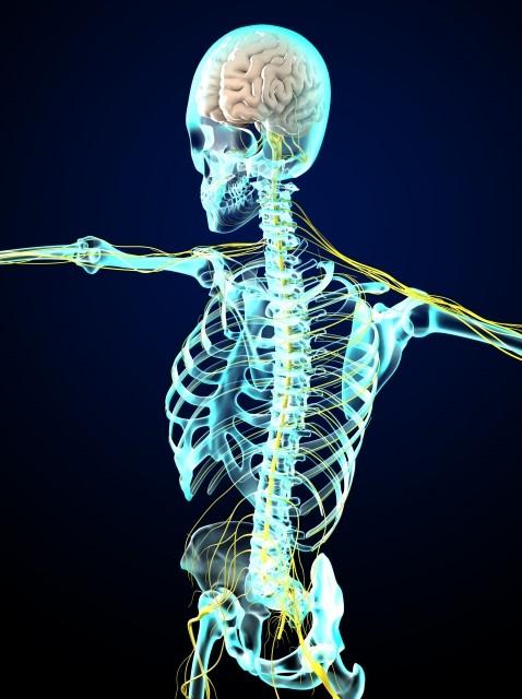 自律神経の画